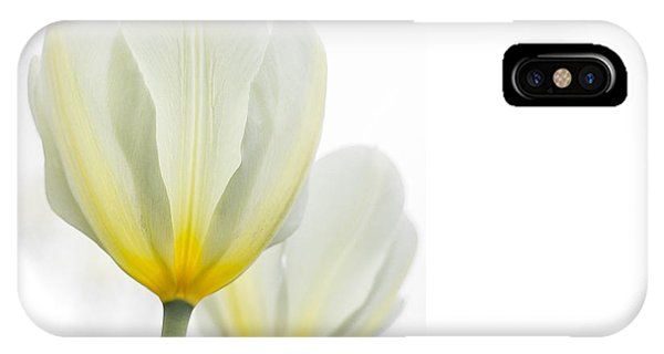 Two Tulips 1 IPhone Case