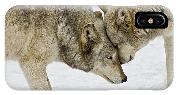 Two Wolves In  A Staredown IPhone Case