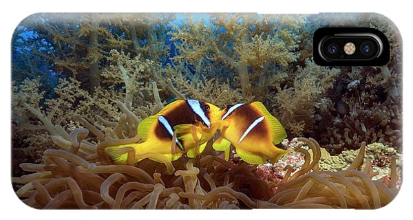 Twoband Anemonefish In An Anemone Phone Case by Alexis Rosenfeld/science Photo Library