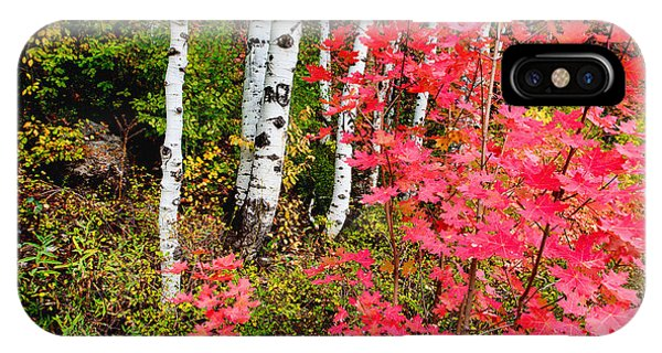 Foliage iPhone Case - Uinta Colors by Chad Dutson