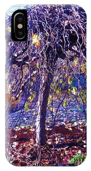 Umbrella Tree In Fall IPhone Case