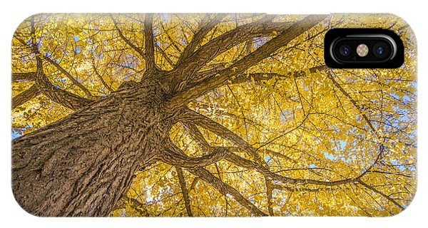 Under The Autumn Tree IPhone Case