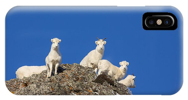 Sheep iPhone Case - Under The Blues Skies Of Winter by Tim Grams