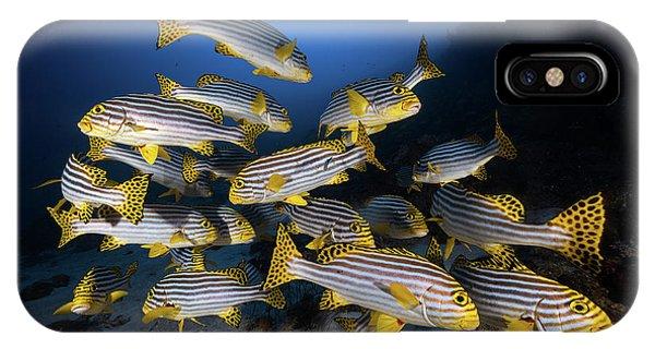 Underwater iPhone Case - Underwater Photography-indian Ocean Sweetlips by Barathieu Gabriel