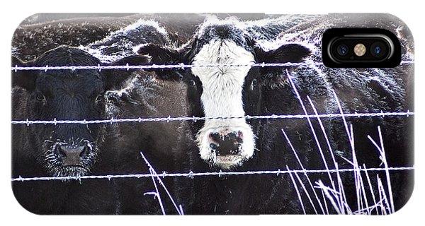 Unhappy Cows IPhone Case
