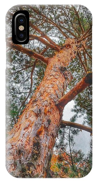 Up A Tree Phone Case by Tom Kiebzak
