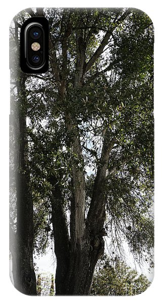 Up-view Of Oak Tree IPhone Case