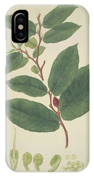 Upas Tree Leaves Phone Case by Natural History Museum, London/science Photo Library
