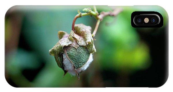 Upland iPhone Case - Upland Cotton (gossypium Hirsutum) by Sam K Tran/science Photo Library