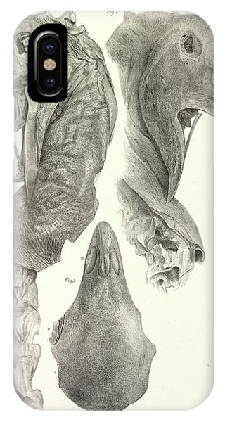 Upland iPhone Case - Upland Moa by Natural History Museum, London