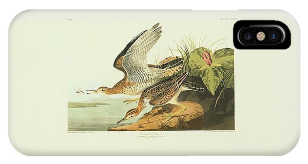 Upland iPhone Case - Upland Sandpiper by Natural History Museum, London/science Photo Library