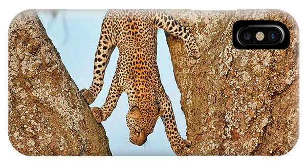 Leopard iPhone Case - Upside Down by Alessandro Catta