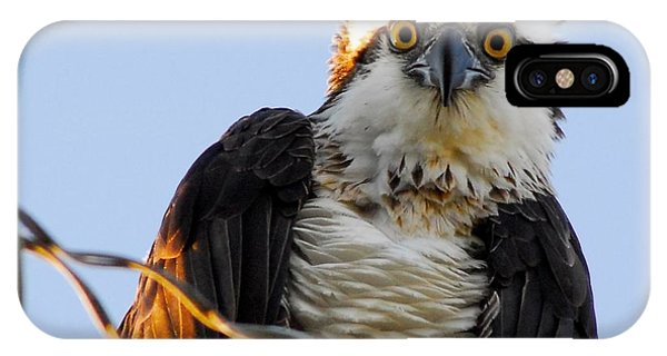 Ospreys iPhone Case - Urban Osprey by Quinn Sedam