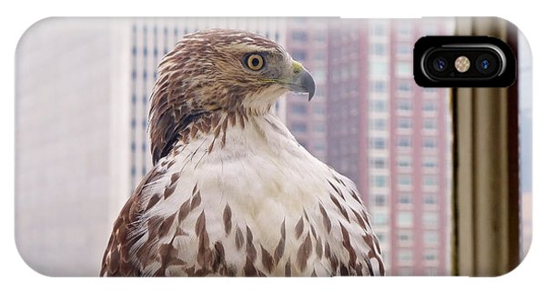 Urban Red-tailed Hawk IPhone Case