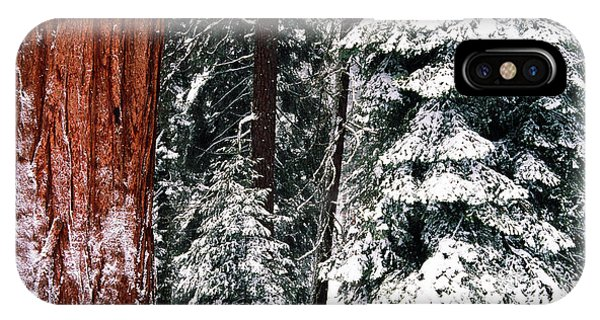 Cold Day iPhone Case - Usa, California, Sequoia National Park by Inger Hogstrom