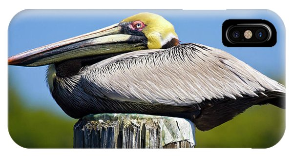 Cypress iPhone Case - Usa, Florida, Everglades City, Big by Jaynes Gallery