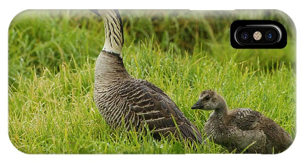 Goslings iPhone Case - Usa, Hawaii, The Big Island, Hakalau by Jaynes Gallery