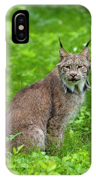 Lynx iPhone Case - Usa, Minnesota, Sandstone, Lynx by Hollice Looney