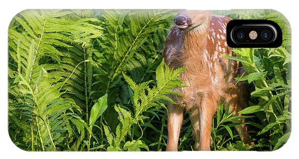 White Tailed Deer iPhone Case - Usa, Minnesota, Sandstone, Minnesota by Jaynes Gallery