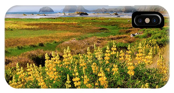 Usa, Oregon Landscape Of Yellow Lupine IPhone Case
