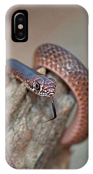 Eastern Brown Snake iPhone Cases | Fine Art America