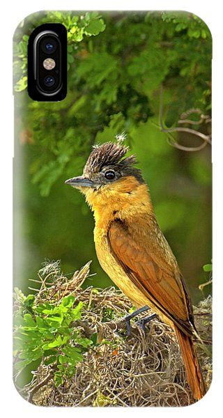 Migratory Birds iPhone Case - Usa, Texas, Santa Ana National Wildlife by Jaynes Gallery