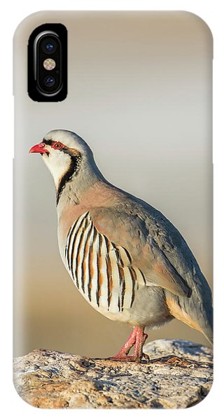 Upland iPhone Case - Usa, Utah, Antelope Island State Park by Elizabeth Boehm