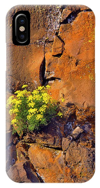 Basalt iPhone Case - Usa, Washington Lomatium Flowers by Jaynes Gallery