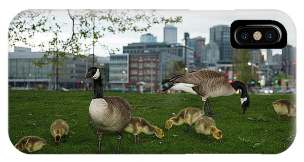 Goslings iPhone Case - Usa, Washington, Seattle, South Lake by Rick A Brown