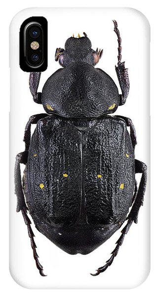 Coleoptera iPhone Case - Variable Chafer by F. Martinez Clavel