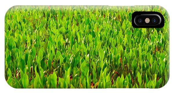 Boynton iPhone Case - Vegetation, Boynton Beach, Florida, Usa by Panoramic Images