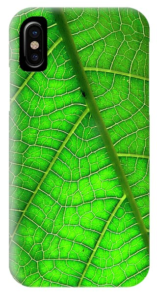 Monocotyledon iPhone Case - Venation Of The Leaf Of A Dicotyledon. by Simon Fraser/science Photo Library