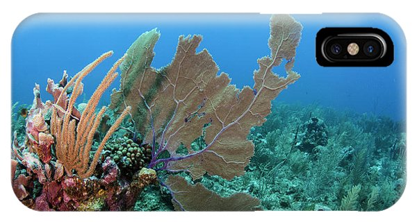 Barrier Reef iPhone Case - Venus Sea Fan (gorgonia Flabellum by Pete Oxford