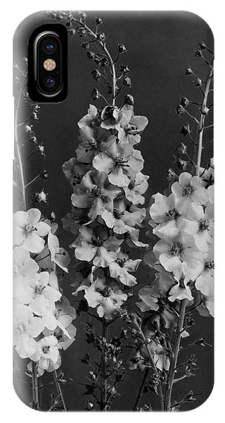Verbascum Phoeniceum Flowers IPhone Case