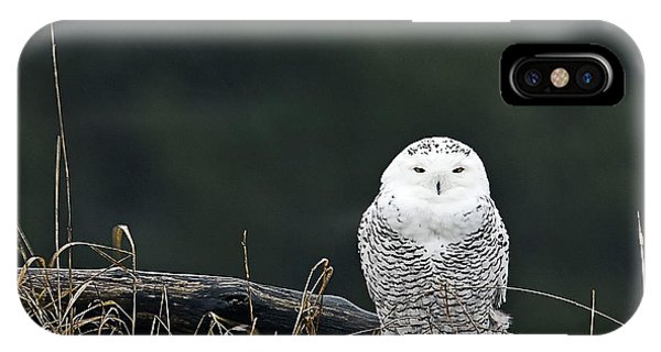Vermont Snowy Owl IPhone Case