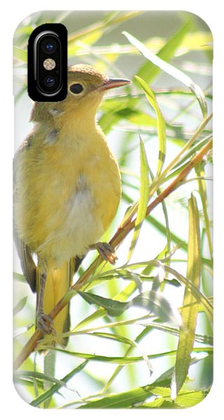 Very Yellow Warbler IPhone Case