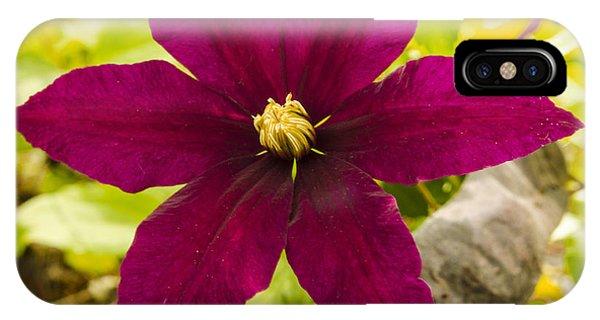Vibrant Clematis Niobe In Late Spring Phone Case by Deborah Smolinske