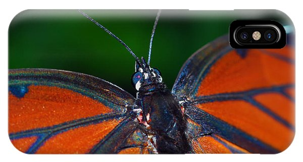 Viceroy IPhone Case