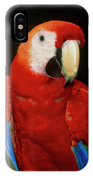 Macaw iPhone Case - View Of A Scarlet Macaw (ara Macao) by William Ervin/science Photo Library