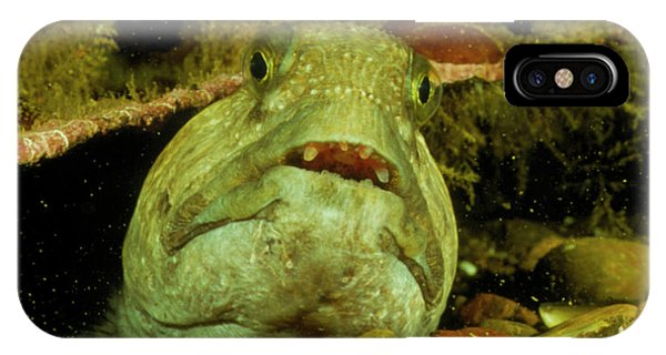 View Of A Wolf Fish Phone Case by Rudiger Lehnen/science Photo Library