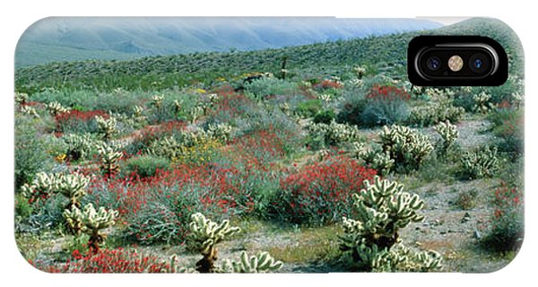 Teddy Bear Cholla iPhone Case - View Of Desert Wild Flowers And Cacti by William Ervin/science Photo Library