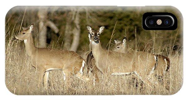 Vigilant White-tailed Deer IPhone Case