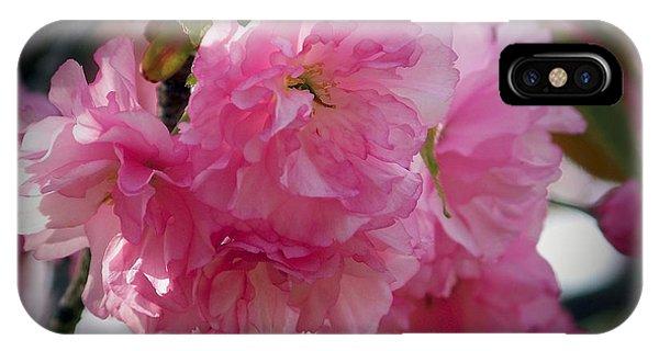 Vignette Cherry Blossom IPhone Case
