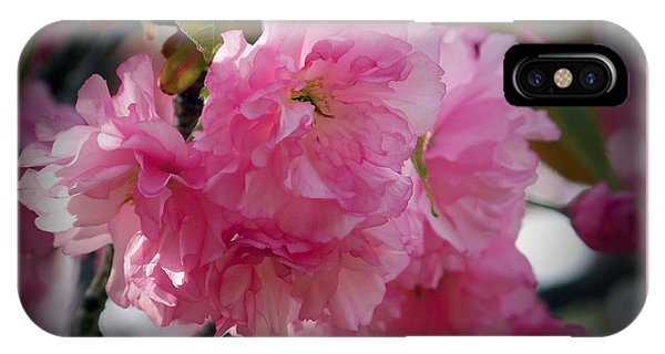 Vignette Cherry Blossom IPhone Case