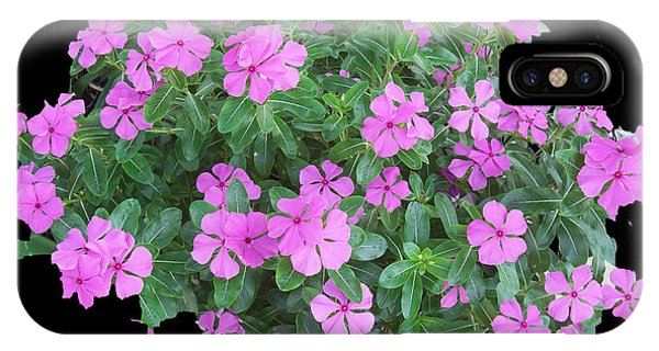 Vinca Plant IPhone Case