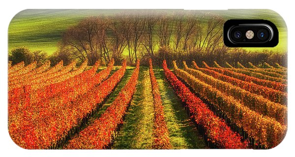Agriculture iPhone Case - Vine-growing by Piotr Krol (bax)