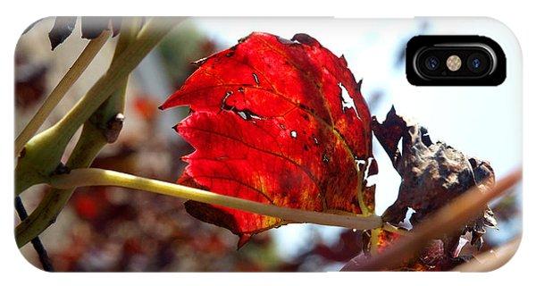 Vine Leaf At Fall. 02 Phone Case by Arik Baltinester