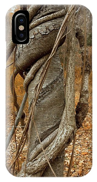 Staff iPhone Case - Vine Strangling A Birch Tree by Bob Gibbons/science Photo Library