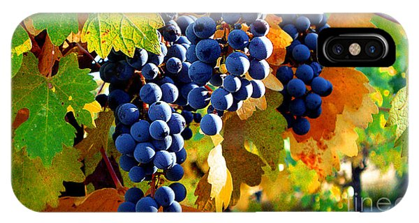 Vineyard 2 IPhone Case