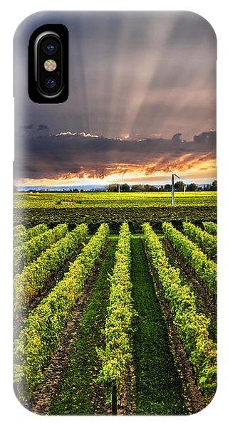 Vineyard At Sunset IPhone Case